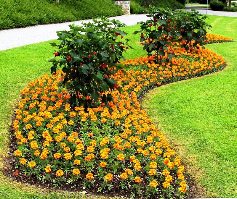 Kradzieże krzewów i kwiatów!